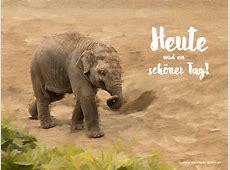 Elefant 004 Hintergrundbild kostenlos