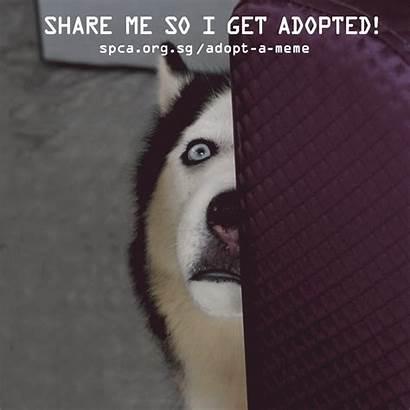 Meme Adopt Memes Campaign Animals Surprised Help
