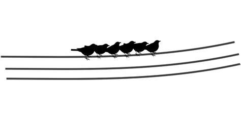 birds  power pole clipart   cliparts