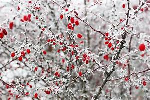 Winterharte Pflanzen Liste : winterharte pflanzen f r balkon und garten ~ Michelbontemps.com Haus und Dekorationen