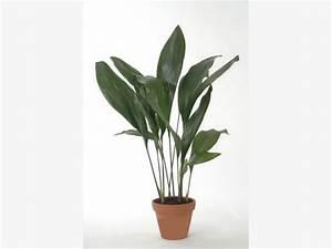 Pflanze Für Dunkle Räume : 11 zimmerpflanzen f r dunkle ecken plants ~ A.2002-acura-tl-radio.info Haus und Dekorationen