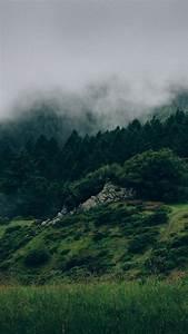 Wallpaper, Forest, 5k, 4k, Wallpaper, 8k, Mist, Hills, Fog