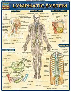 Lymphatic System Reference Guide  Ebook Rental