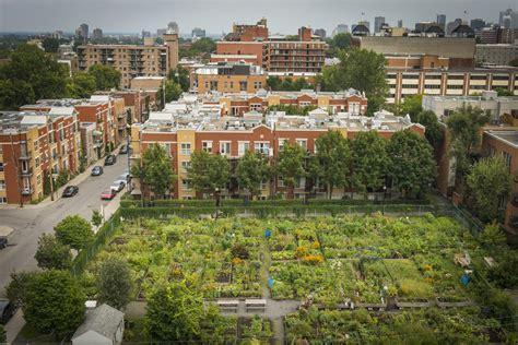 Vue Du Jardin Communautaire Mileend Jardin