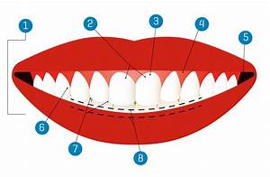 Smile Science  The Anatomy Of A Smile