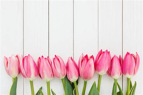 Pink Tulip Backgrounds by Tulip Vectors Photos And Psd Files Free