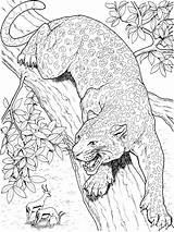Leopard Ausmalbilder Ausdrucken Malvorlagen Kostenlos Zum sketch template