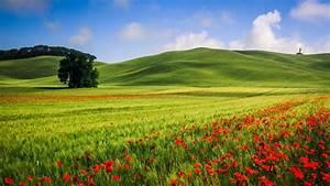 wallpaper Beautiful hills meadow landscape, trees, poppies ...
