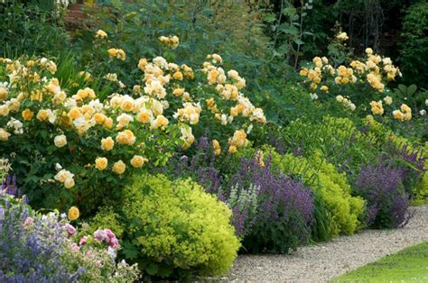 My Favorite Plant Combinations 26 (my Favorite Plant