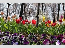 15pc growth in Iran exports of flower, official