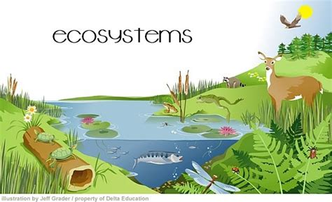 Ecosystem Definition Biology All Bout Biology What Is An Ecosystem