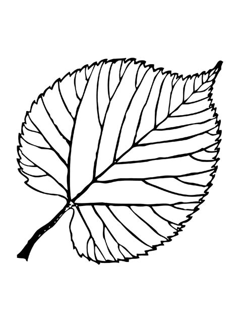 leaf printables for preschool 14 best images of fall 542 | leaf coloring pages for preschool