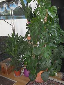 Schimmel In Pflanzen : palmen und co schimmel am ton topf ~ Bigdaddyawards.com Haus und Dekorationen
