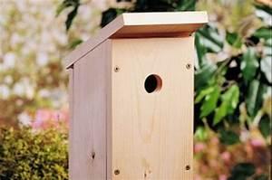 One-Board DIY Birdhouse Backyard Projects - Birds & Blooms