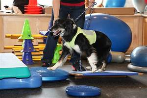 well being and fitness advantages of the certified canine fitness trainer ccft fitpaws
