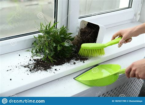 soil window sill closeup cleaning woman