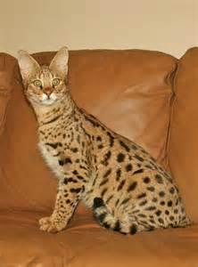 f1 cat f1 cat f1 select exotics