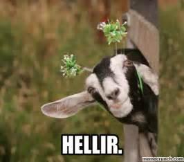Billy Goat Meme - goat meme
