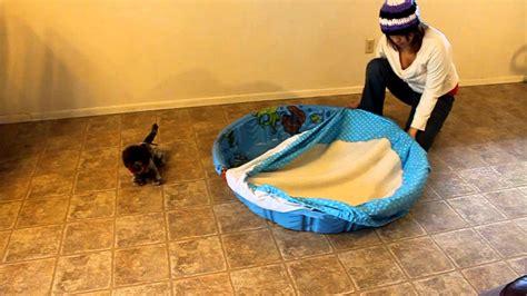 whelping box bedding whelping pool cover mov