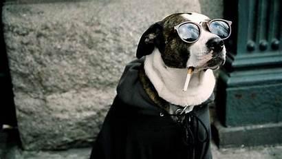 Funny Animal Wallpapers Desktop Animals Dog Background