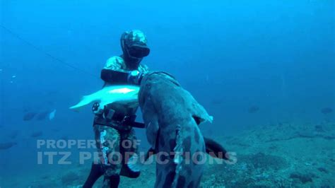 grouper giant diver attacks