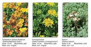 Pflanzen Zur Luftbefeuchtung : auswahl der pflanzen flachdach gr nd cher baunetz wissen ~ Sanjose-hotels-ca.com Haus und Dekorationen