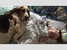 Loyal dogs stay by dying baby's side until her last breath