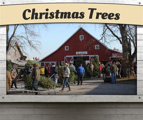 christmas tree farms near indianapolis dull s tree farm pumpkin patch in thorntown indiana