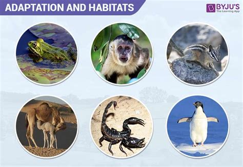 The habitat definition in biology refers to location in the natural ecosystem an organism resides in. Adaptation Of Animals - Three Types of Environmental ...
