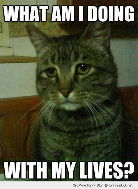 Depressed Cat Meme - 31 most funny sad pictures and photos