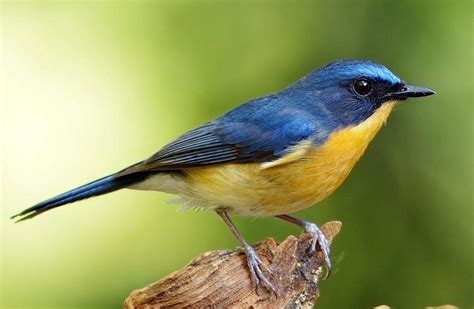 gambar burung yang ada di dunia pernahkah anda melihatnya