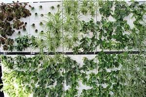 Mur Végétal Extérieur : mur v g tal ext rieur sortir des sentiers battus avec ~ Premium-room.com Idées de Décoration