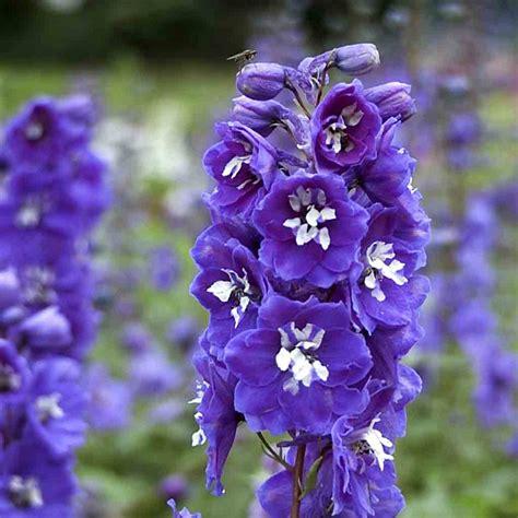 naturagart shop rittersporn violett  kaufen