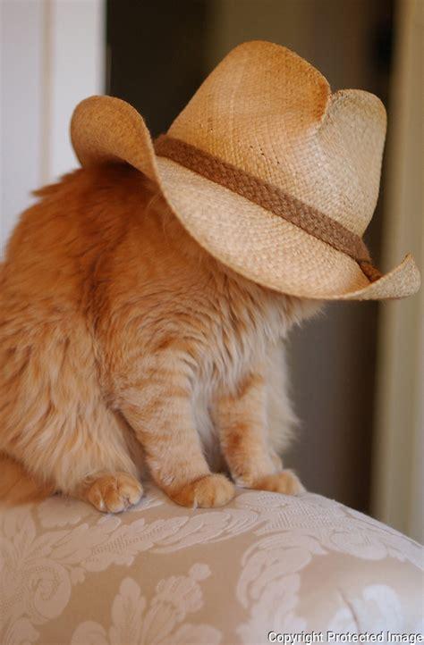 Duncan The Cat And Cowboy Hat Essdras M Suarezems
