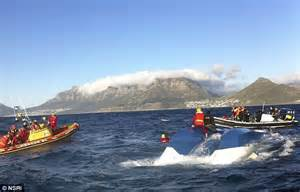 Hout Bay South Africa Boat Attack 2013 by List Of Synonyms And Antonyms Of The Word Hout Bay Shark