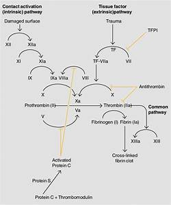 1 The Coagulation Cascade