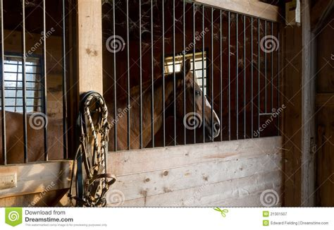 horse stable stock image image  foal portrait