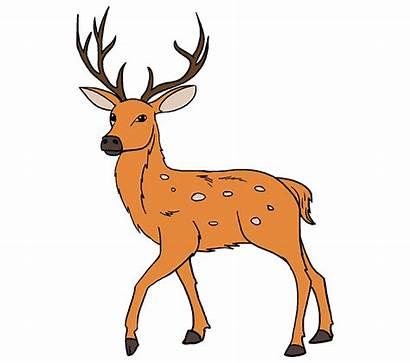 Deer Draw Drawing Easy Realistic Clipart Reindeer
