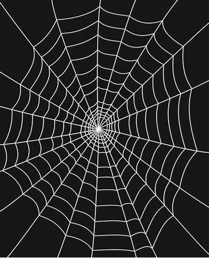 Spider Web Background Vector Spiderweb Clip Spiders