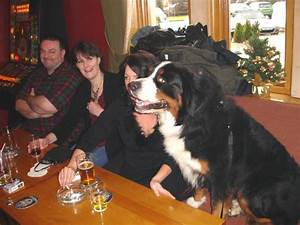 Bernese Mountain Dog Size Comparison