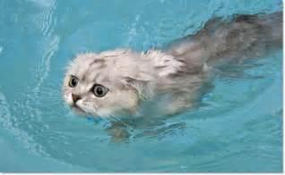swimming cats are so 29 pics izismile