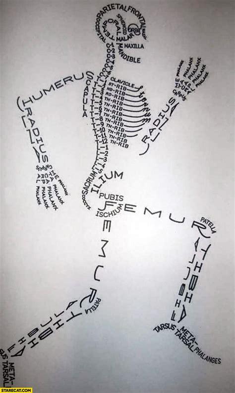 human bone names creative infographic drawing starecatcom