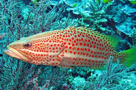 groupers delicious visitar toxic