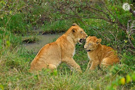 rathika ramasamys wildlife photography wildlife moments
