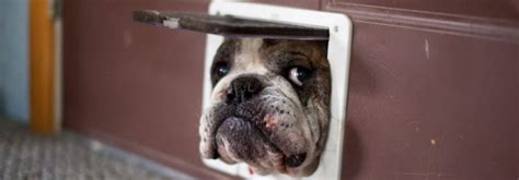 pet insurance underwriters  pet insurance guide