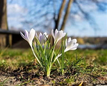 Pflanzen Fruhling Flower Spring