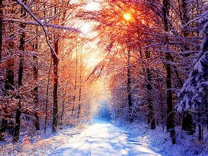 Winter Sunny Forest Wallpapers Desktop Nature Background