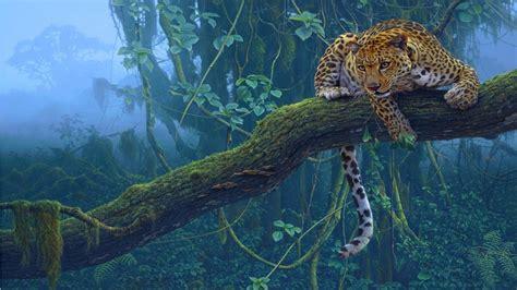 Jaguar Animal Hd Wallpapers - jaguar animal hd wallpaper welcome to starchop