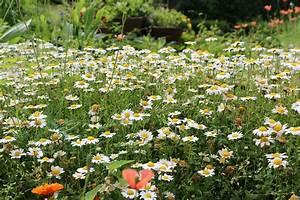 Emejing Image Plate Bande Jardin Photos Awesome Interior