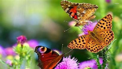 Butterfly Wallpapers Android Beauty Butterflies Level